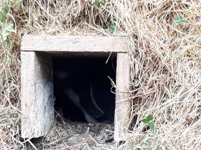 Hiding penguin