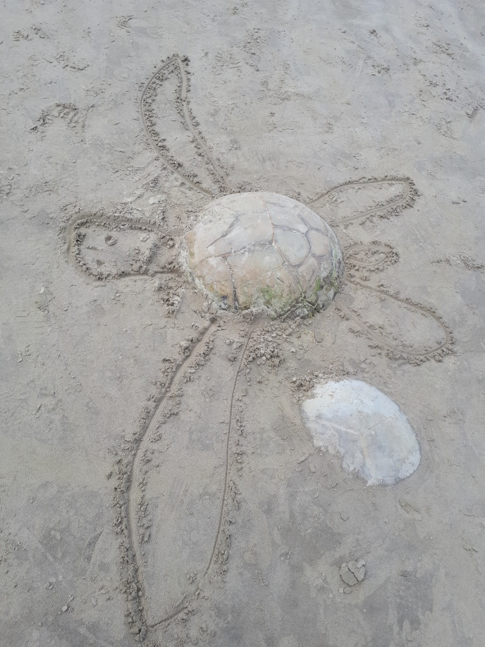 turtle artwork by nature and man
